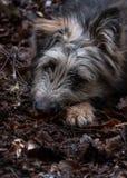 Perro solo de la raza de la mezcla en la tierra Fotografía de archivo libre de regalías