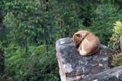 Perro solo de la sensación Foto de archivo