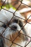 Perro solo en jaula Fotografía de archivo libre de regalías