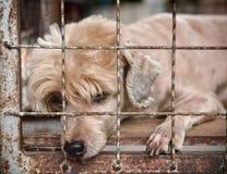 Perro solo en jaula Imagen de archivo libre de regalías