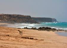 Perro solo en la playa del océano Imágenes de archivo libres de regalías