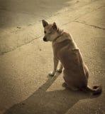 Perro solo en las calles fotos de archivo