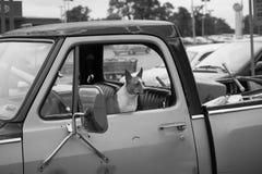 Perro solo que espera Imagen de archivo libre de regalías