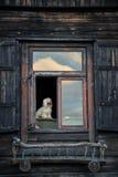 Perro solo que mira a través de su ventana Fotografía de archivo libre de regalías