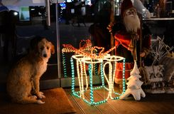 Perro solo, sin hogar con la decoración del Año Nuevo Imagen de archivo libre de regalías