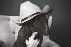 Perro, sombrero Fotografía de archivo
