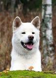 Perro sonriente Fotografía de archivo