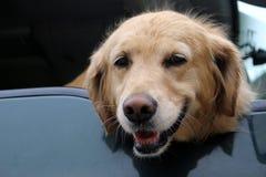 Perro sonriente Fotografía de archivo libre de regalías