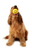 Perro sonriente de la cara Fotos de archivo libres de regalías