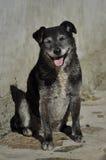 Perro sonriente divertido Foto de archivo