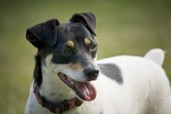 Perro sonriente lindo   Imagen de archivo