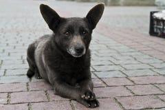 Perro sorprendido Imágenes de archivo libres de regalías