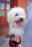 Perro sostenido en brazos de un hombre joven foto de archivo