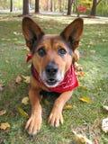 Perro starring atento Foto de archivo