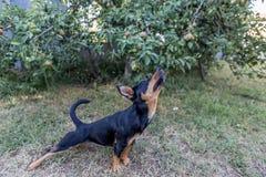 Perro streching en jardín imagenes de archivo