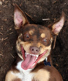 Perro sucio feliz Imagen de archivo libre de regalías