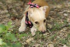 Perro tímido Foto de archivo