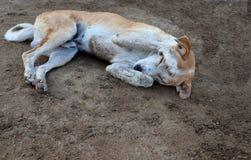 Perro t?mido que duerme en la tierra foto de archivo