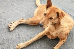Perro tailandés sin hogar de Brown en la calle Imagen de archivo