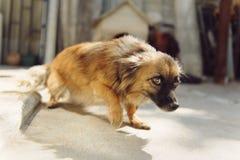 Perro temeroso Imágenes de archivo libres de regalías
