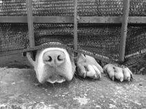 Perro a través de una cerca Imagen de archivo libre de regalías