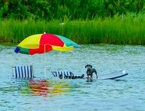 Perro trenzado en la alta marea Imagenes de archivo