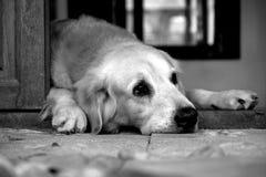 Perro triste foto de archivo