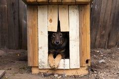 Perro triste Fotos de archivo libres de regalías
