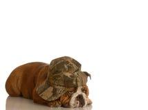 Perro triste Fotografía de archivo