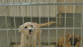 Perro triste cerrado en jaula metrajes