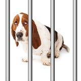 Perro triste detrás de barras Foto de archivo libre de regalías