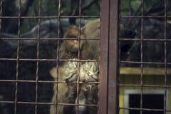 Perro triste detrás de una cerca del hierro Fotos de archivo