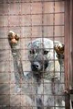 Perro triste detrás de una cerca del hierro Imagen de archivo
