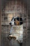 Perro triste detrás de una cerca del hierro Imagenes de archivo