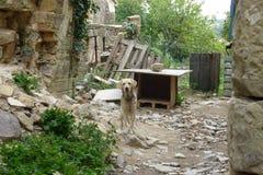 Perro triste en la yarda de la casa vieja fotos de archivo