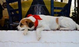 Perro triste en mantón rojo Imágenes de archivo libres de regalías