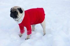Perro triste precioso del barro amasado en un suéter rojo en la nieve blanca Imagen de archivo libre de regalías