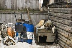 Perro triste que miente en una caseta de perro del invierno Imagenes de archivo