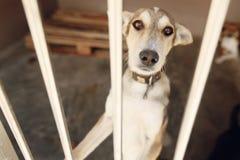 Perro triste que mira con los ojos infelices en la jaula del refugio, emotiona triste Imágenes de archivo libres de regalías