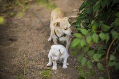 Perro triste sin hogar con el perrito Imagen de archivo libre de regalías