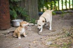 Perro triste sin hogar con el perrito Foto de archivo libre de regalías
