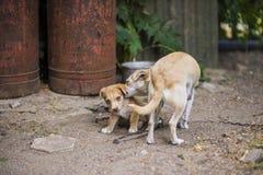 Perro triste sin hogar con el perrito Imagenes de archivo