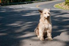 Perro triste y sin hogar Fotos de archivo libres de regalías