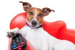 Perro TV Imagenes de archivo