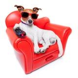 Perro TV Foto de archivo libre de regalías