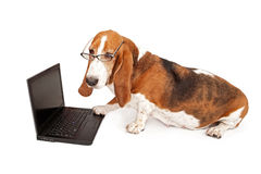 Perro usando un ordenador portátil aislado en blanco Imagenes de archivo