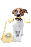 Perro usando un teléfono amarillo imagen de archivo