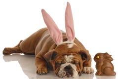 Perro vestido como conejito de pascua