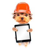 Perro vestido como constructor con PC de la tableta Fotos de archivo libres de regalías