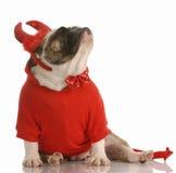Perro vestido como diablo Imagen de archivo